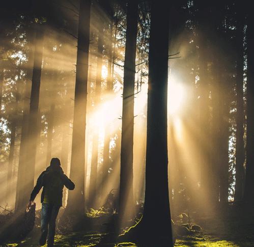 beautiful forest light
